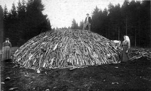 Charcoal wood pile