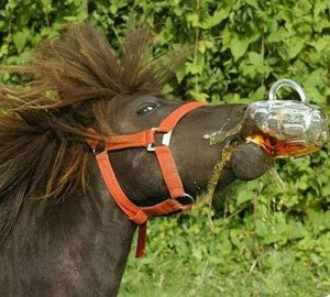 drunkhorse