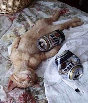 hangover_cat_10