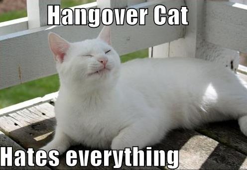 hangover_cat_12