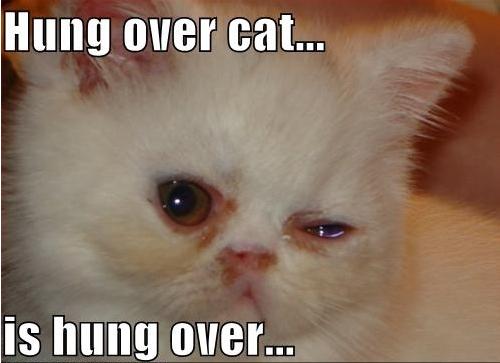hangover_cat_15