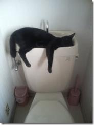 hangover_cat_17