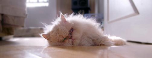 hangover_cat_18