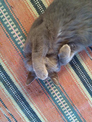 hangover_cat_3