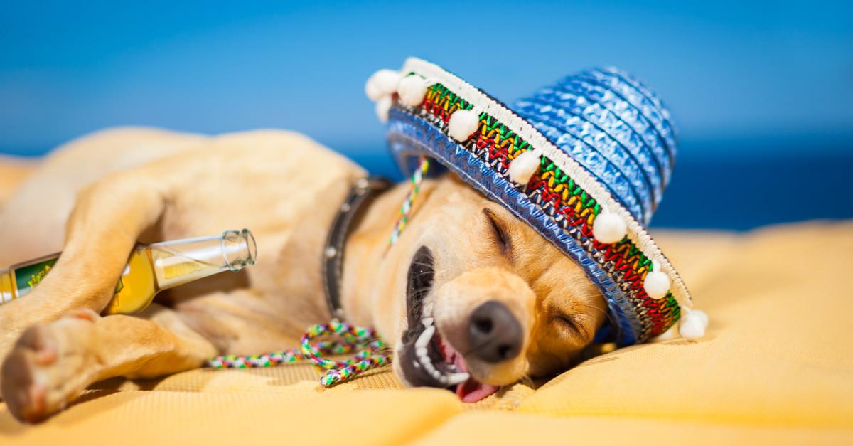 Dog with hangover